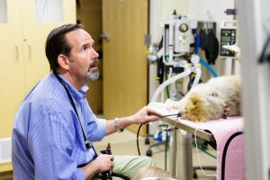 At SCVIM, one of our specialties is performing video endoscopy procedures on pets