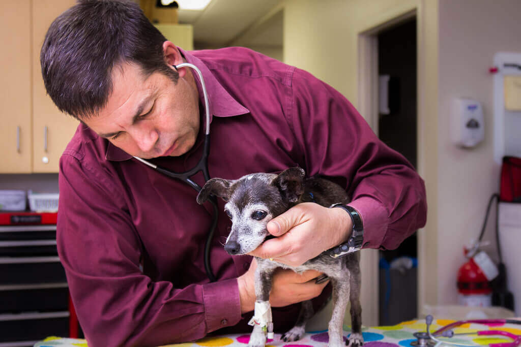 At SCVIM, we work closely with our patients and their pet parents