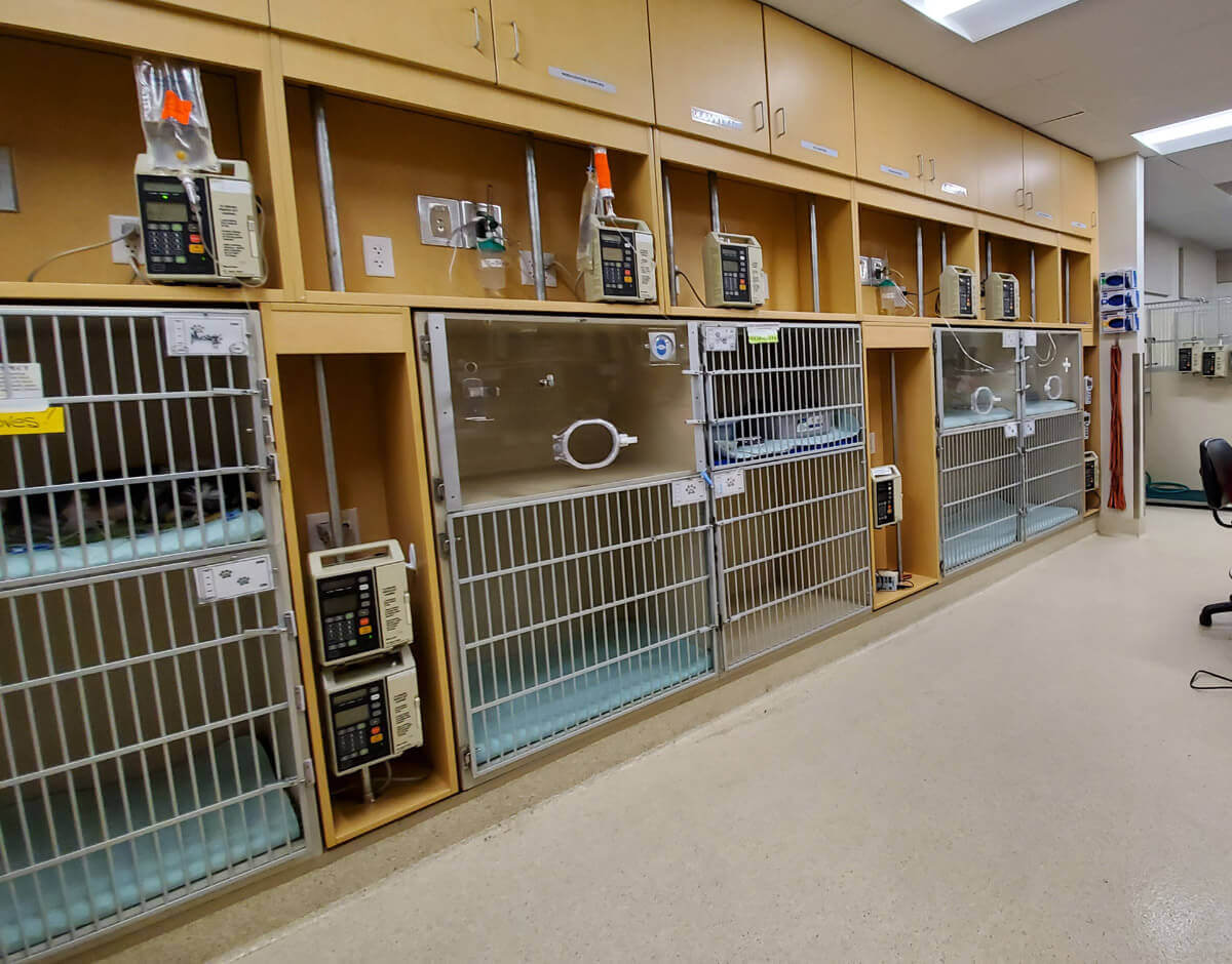 We have several kennels equipped for oxygen in our SCVIM, which provides 24-hour critical care for pets